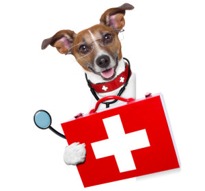 medical doctor dog beside a blank banner