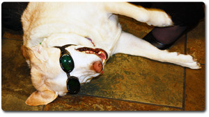 Laser Therapy Dog
