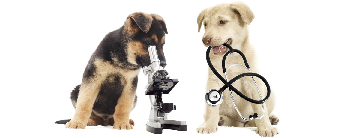 Companion Animal Clinic Tecumseh Michigan