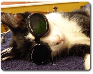 Veterinary Laser Therapy at Companion Animal Clinic Tecumseh MI
